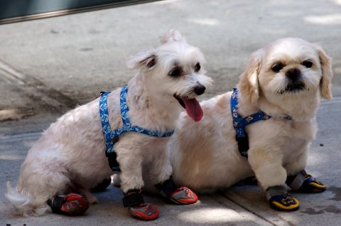 dogs-in-sneakers
