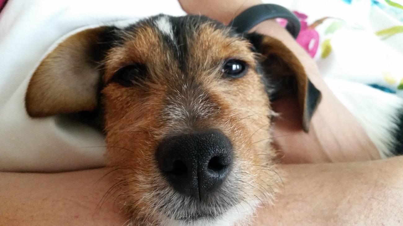Problem z agresją u psa - co robić?