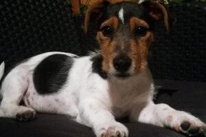 "Ile ""ludzkich"" lat ma pies? Naukowcy obalili popularny mit"
